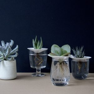How to propagate your cactus or succulent plants. Tutorial by Sprout Sproutanica