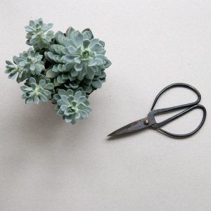 How to propagate cactus and succulent plants. Process photo
