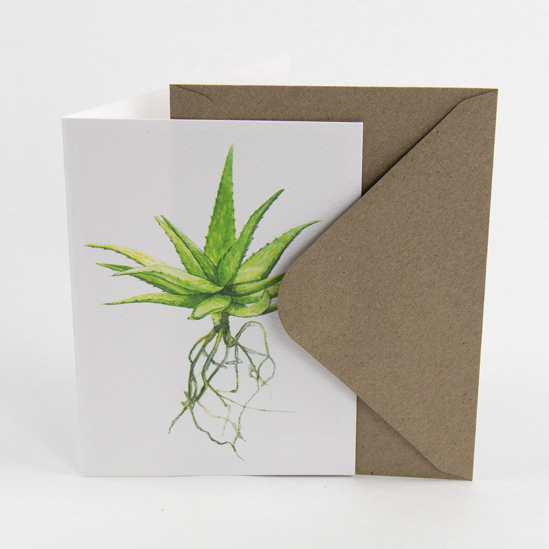 Sprout – illustrated cactus postcard