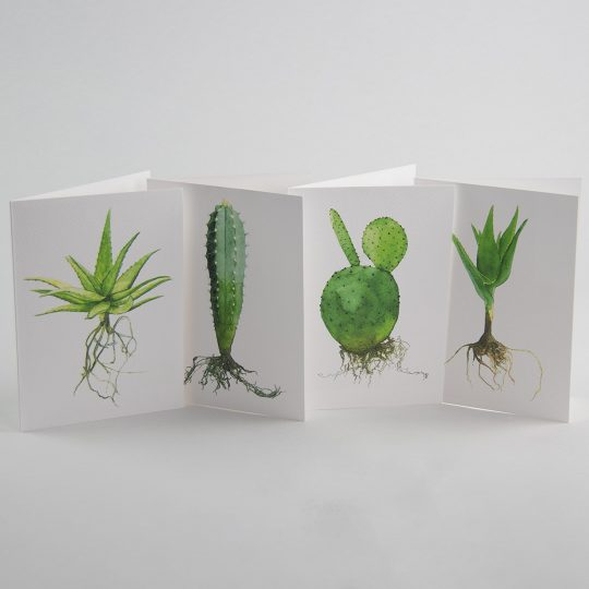 Selection of illustrated plant postcards. Photo