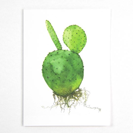 Photo of an illustrated cactus postcard