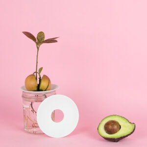 A cute growing avocado with leaves and roots on a porcelain germination plate, by Botanopia