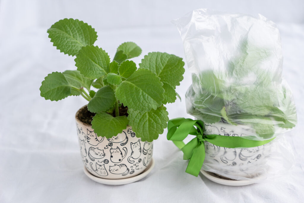 Mini-greenhouse with plastic bags