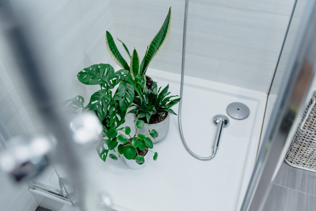 Plants gathered in a shower
