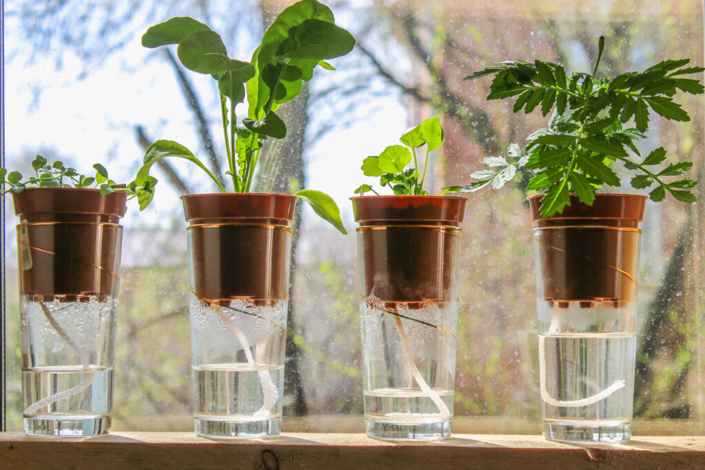 Self watering system for plants with a rope